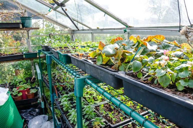 greenhouse with plenty of shelving filled with plants & seedlings