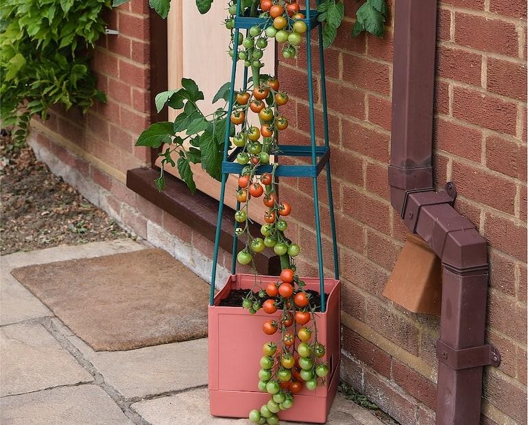 Garden Grow Self-watering 4 tier tomato grower