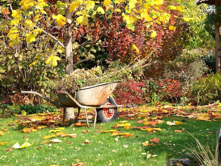 autumn-leaves-surrounding-wheelbarrow