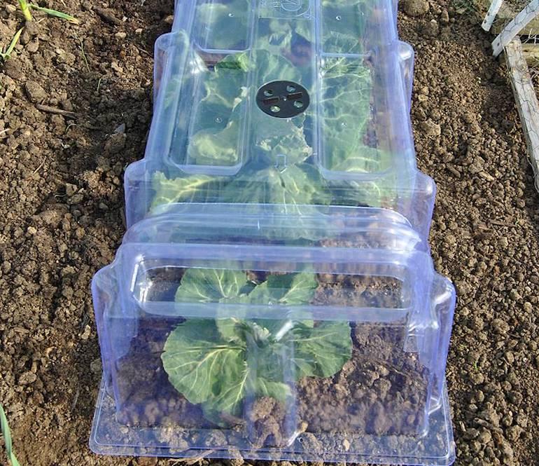 Mini Greenhouse Cloche from Thompson & Morgan