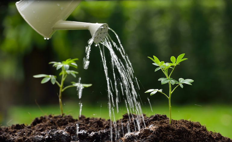person watering shoots near roots and not on top of leaves