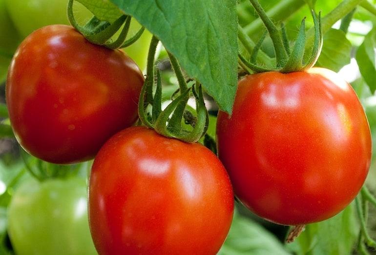 Tomato 'Nimbus' from Thompson & Morgan