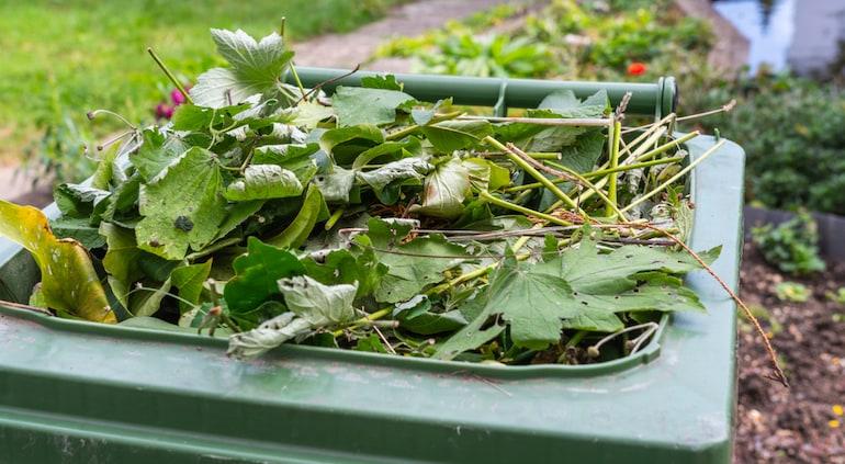 large bin full of garden leaves