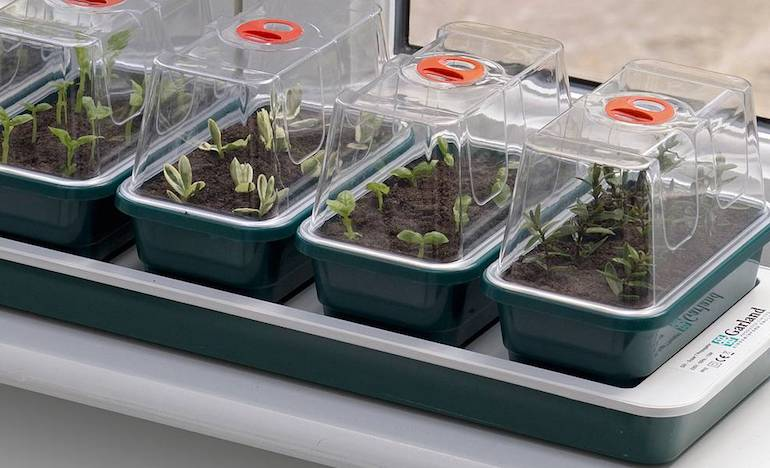 electric windowsill propagator