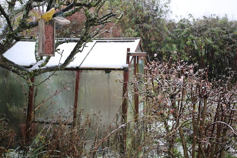 Top 10 tips for heating a greenhouse in winter | Thompson & Morgan