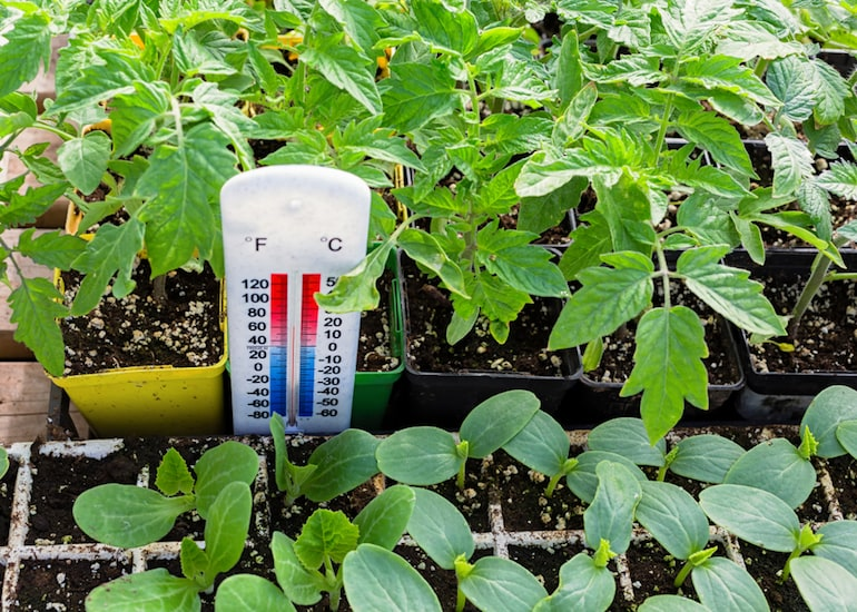 Top 10 Tips For Heating A Greenhouse In Winter Thompson