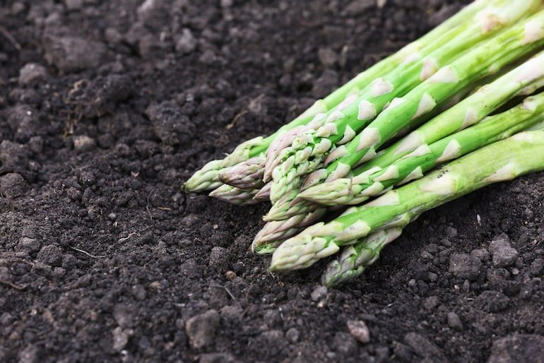 cut green asparagus over black soil