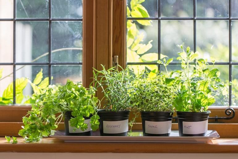 labelled herbs growing on windowsills