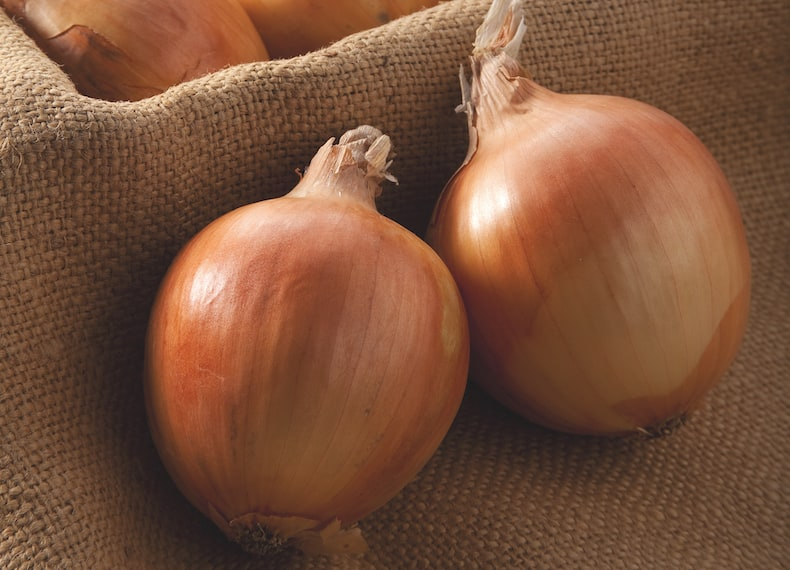 Onion 'Shakespeare' from Thompson & Morgan