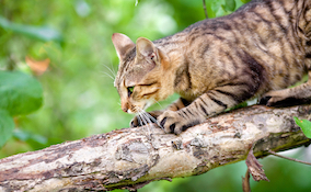 cat clawing on a branch