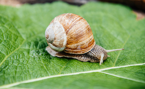 closeup of snail in the garden