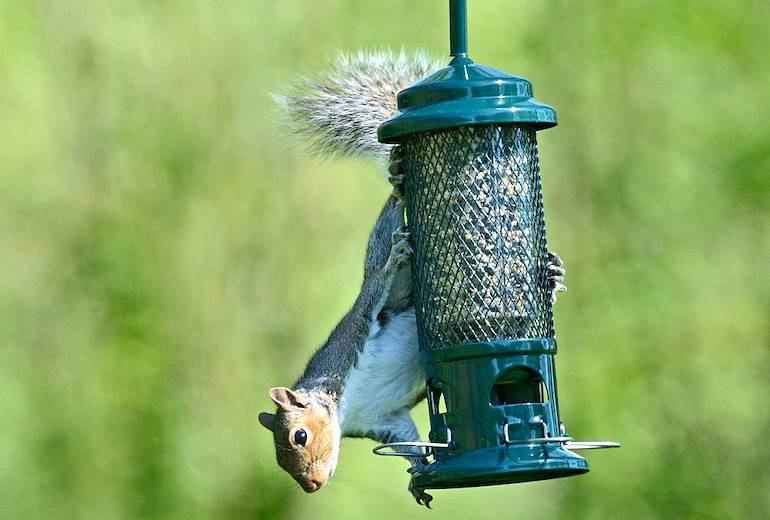 Brome Squirrel Buster Seed Feeder from Thompson & Morgan
