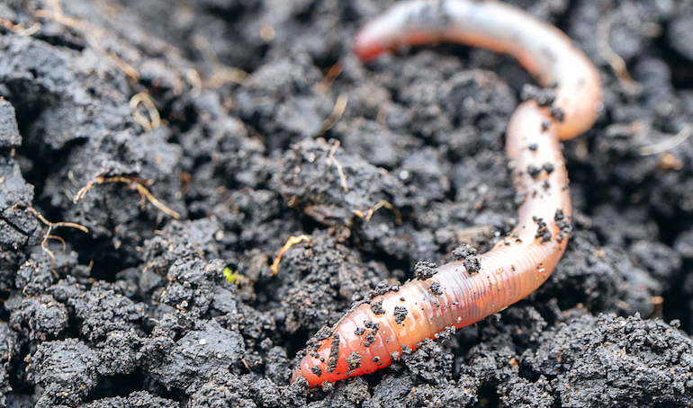 Worms Garden Pests Diseases