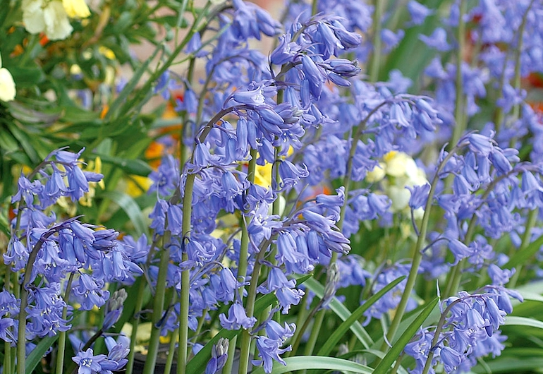 Top 10 Spring Flowering Bulbs Thompson Morgan