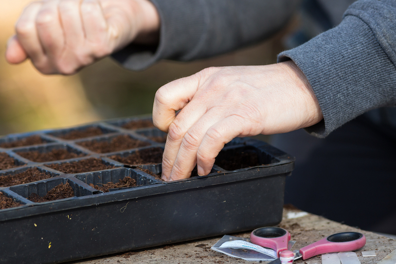 gardener sowing seeds in a modular tray