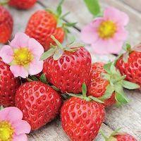 Strawberry 'Just Add Cream' - Top 10 Unique Plants