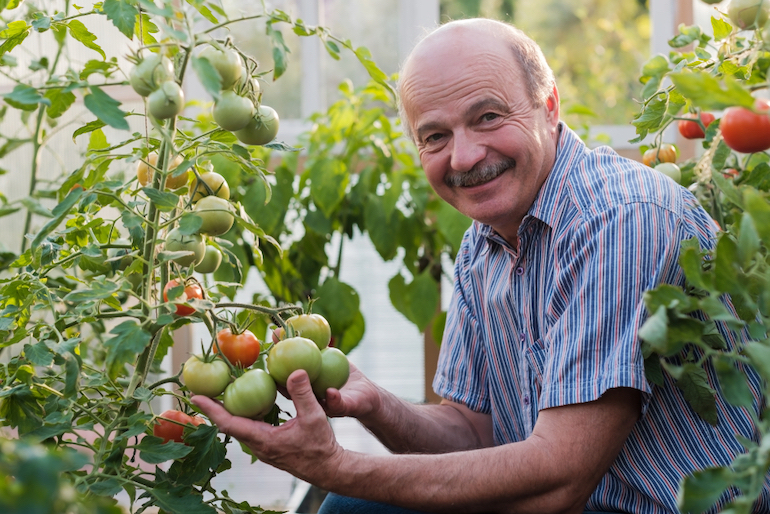 elderly man looking into the camera holding tomatoes