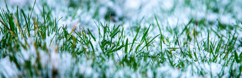 Closeup of snow covered grass