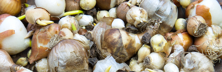 collection of various flower bulbs