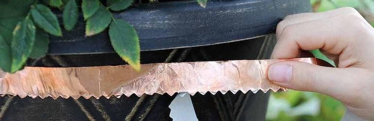Copper Slug Tape from Thompson & Morgan