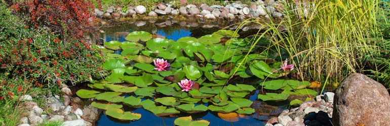 garden pond with lilypads and flowers