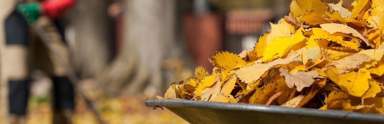 closeup image of yellow and brown leaves in a wheelbarrow