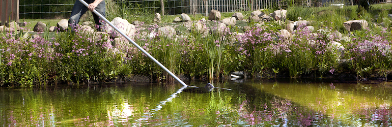 gardener cleaning up a pond with a net