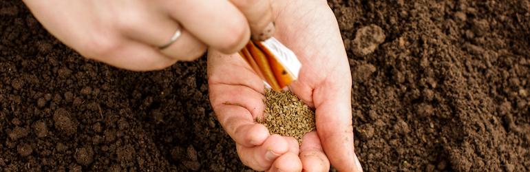 hands holding carrot seeds