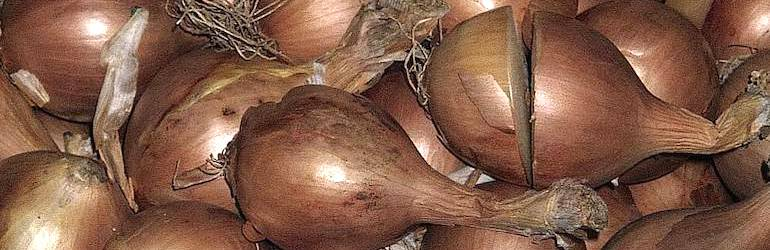 What-vegetables-to-plant-September-onions - Onion 'Shakespeare' (Autumn Planting) from Thompson & Morgan