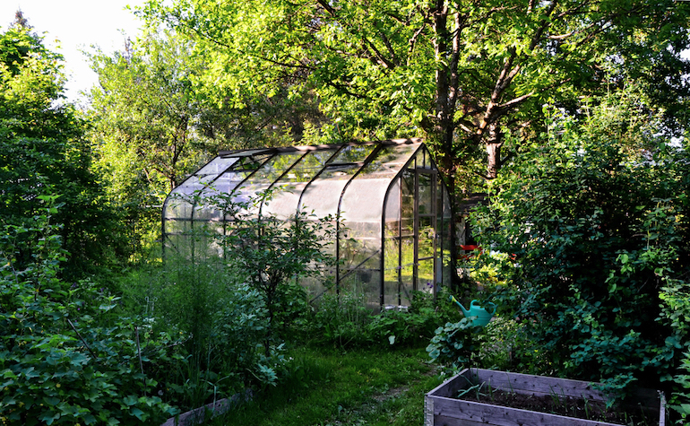 Tall trees casting shadows on greenhouse