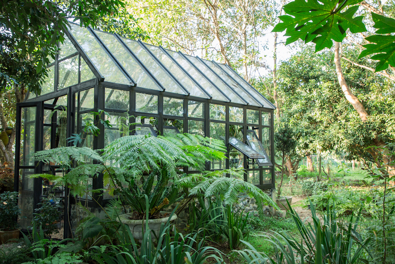 greenhouse surrounded by greenery