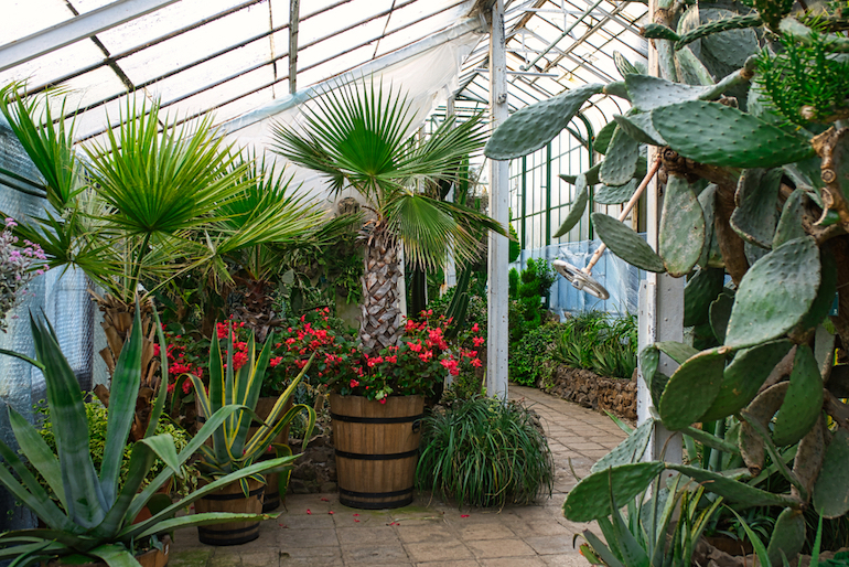 larger greenhouse with tropical plants and palm trees