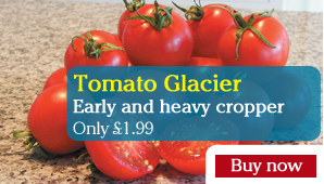 Tomato Glacier - Part of the Alan Titchmarsh Collection
