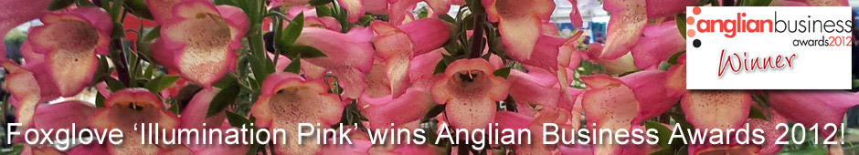 Foxglove 'Illumination Pink' has won the Anglian Business 2012 Innovation Award