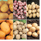 Baby New Potato Collection - Save �3.35