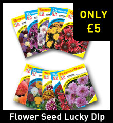 Flower Seed Lucky Dip