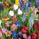Best bulbs for a container - Bulb Extra Special Mix