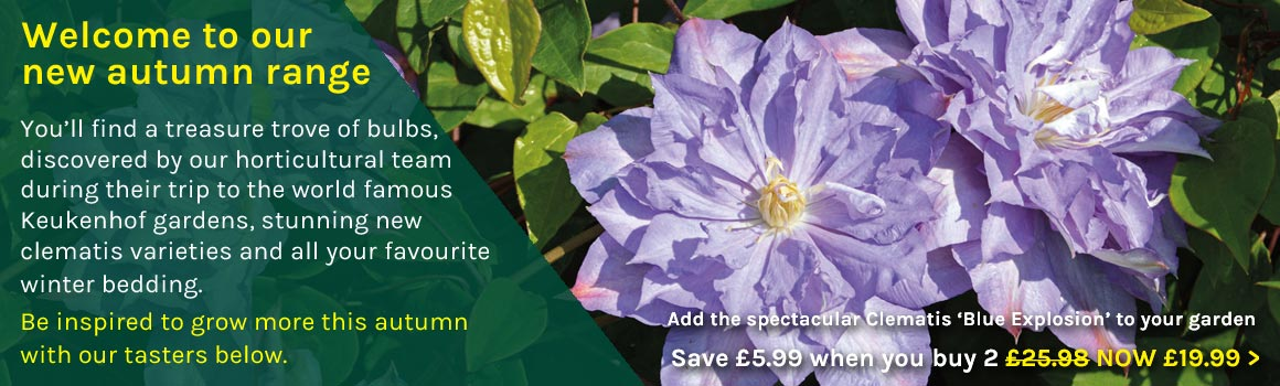 New Autumn Range - view Clematis 'Blue Explosion' now