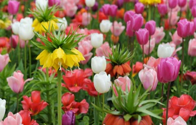 4 packs for the price of 3 on spring bulbs