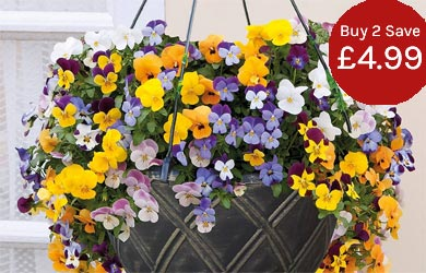 Pre-planted hanging baskets - simply hang and enjoy