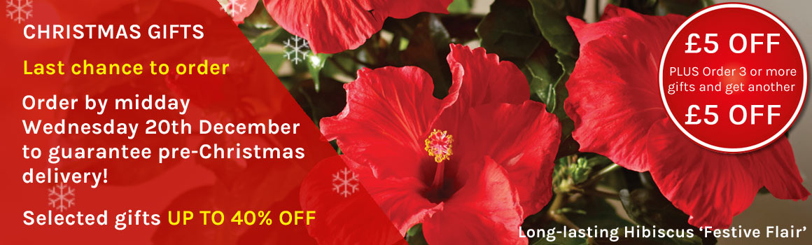 Christmas Gifts - Finest quality indoor bulbs and plants, outdoor plants, flowers and decorations delivered direct to their door with a personalised message. Selected items now reduced by up to 40%.