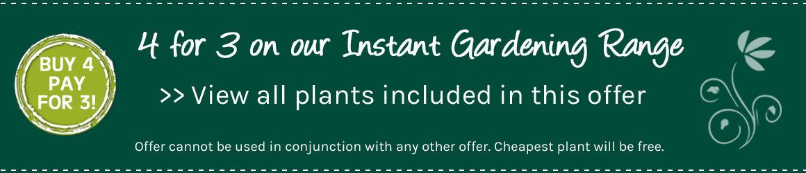 Instant Gardening Range - get 4 plants for the price of 3 - view entire range now