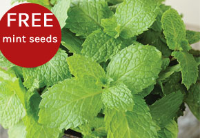 Free Mint Seeds when you order potatoes
