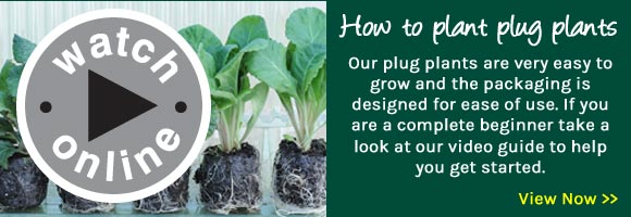 How to Grow Plug Plants
