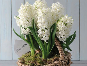 Hyacinth White Willow Basket