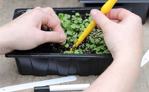 Seed & Seedling Planting Kit