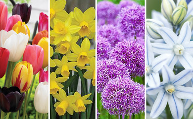 Utlimate Spring Bulb Collection