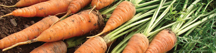 Andrew Tokely's Top 6 Carrot Recommendations