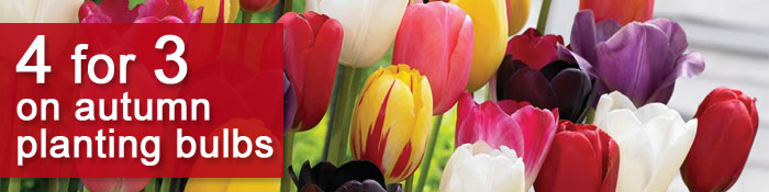 Receive 4 for 3 on this wonderful selection of autumn planting bulbs