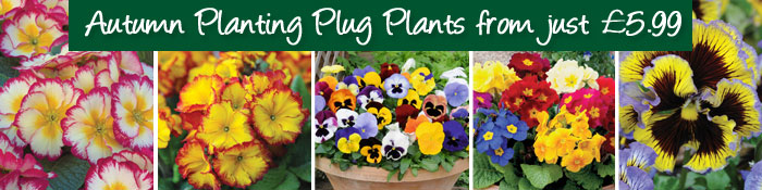 Autumn Planting Plug Plants